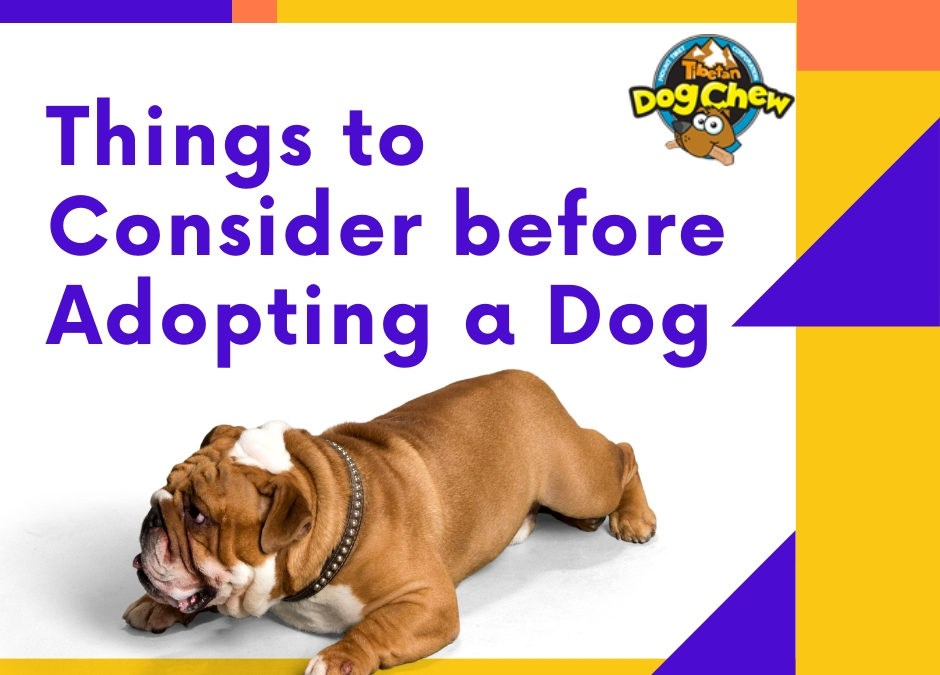 Things to Consider before Adopting a Dog