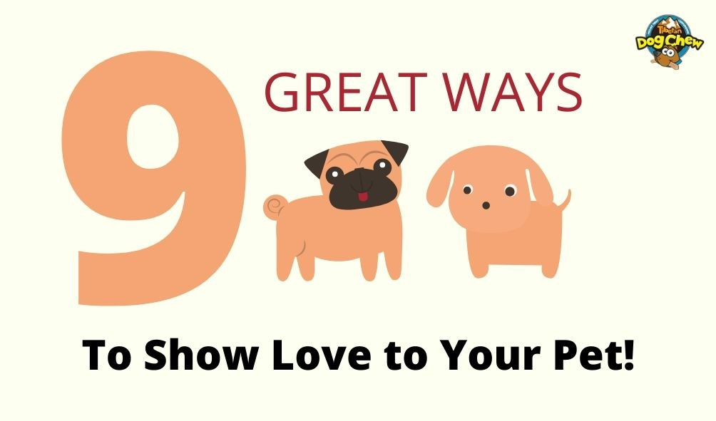 How do puppies show affection to humans? 9 great ways to show love to your pet!
