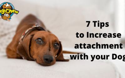 7 Tips to Increase attachment with your Dog