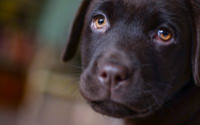 Symptoms, Causes & Treatment of Separation Anxiety in Dog