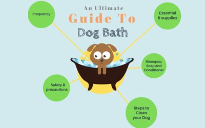 An Ultimate Guide to Washing your Dog(Easy Bath)